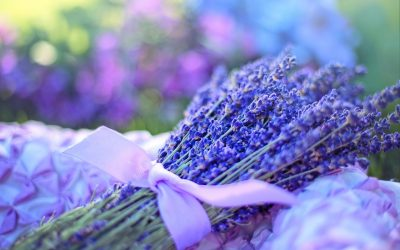 Essential Oils First Aid Kit – Week One – Lavender and Tea Tree
